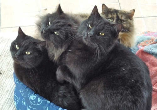 Shadow and her three kittens - Tippy, Tufty and Tigger